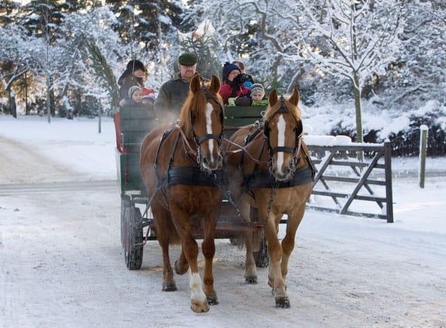 Kør med hestevogn til julemarked på Ryegaard