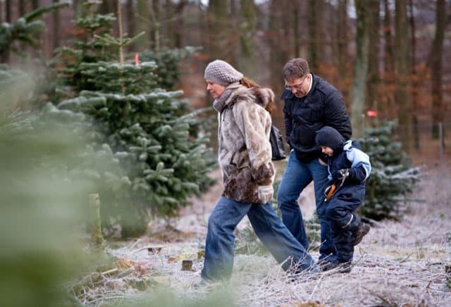Find et godt juletræ til julemarked på Ryegaard